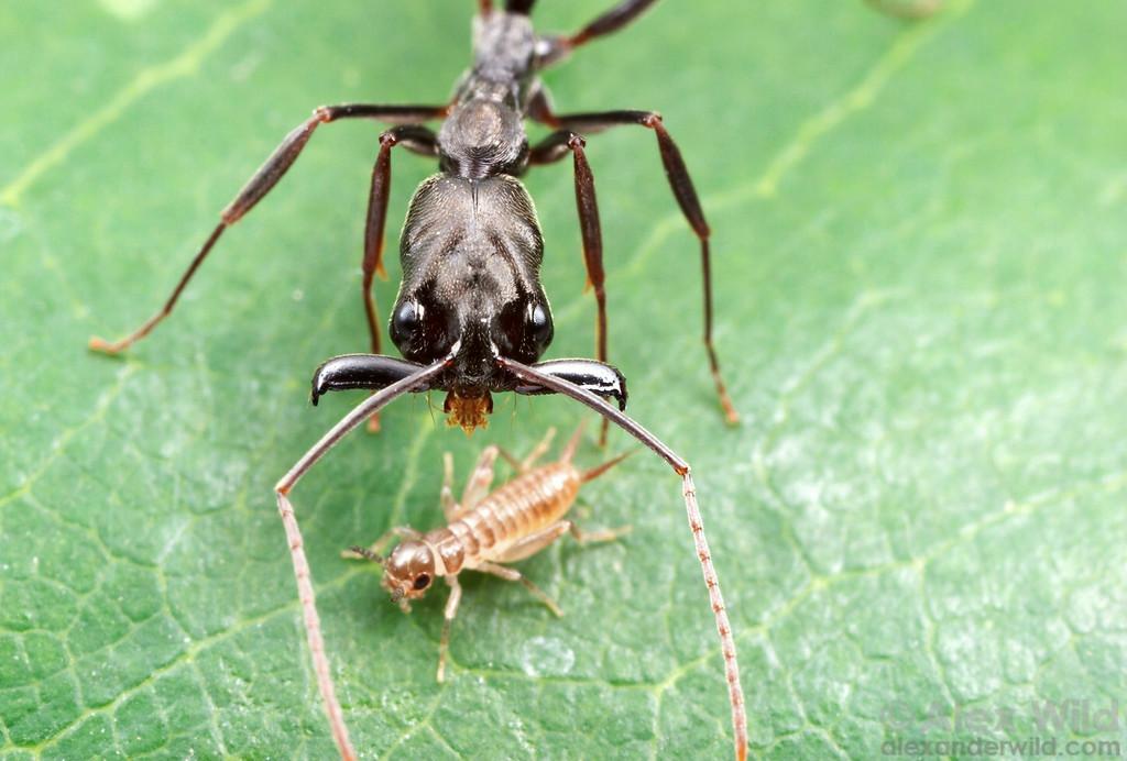 Dziwne mrówki