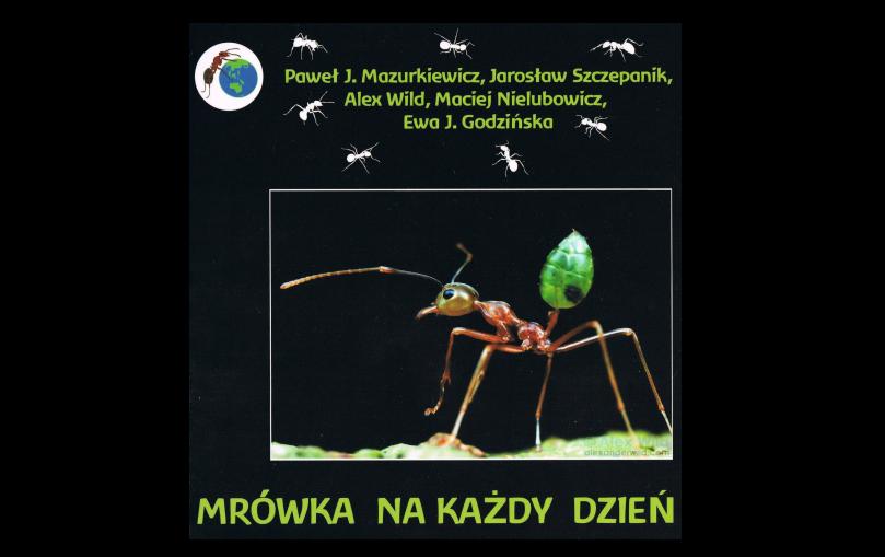 Mrówka na każdy dzień