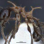 Najnowsze ciekawostki ze świata mrówek