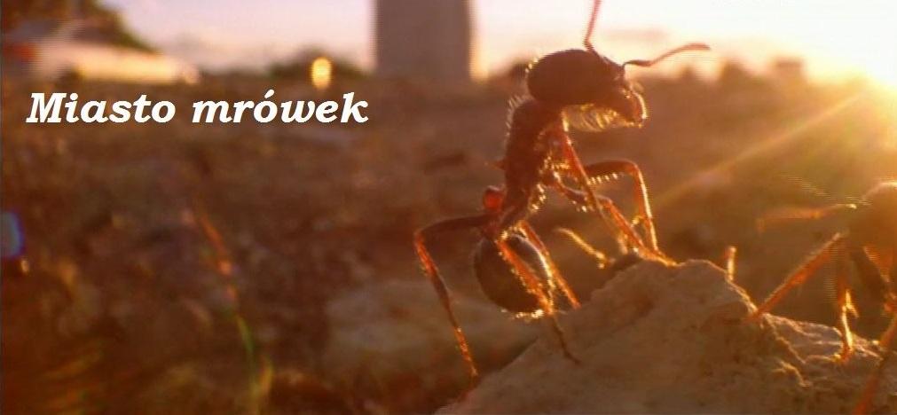 Miasto mrówek