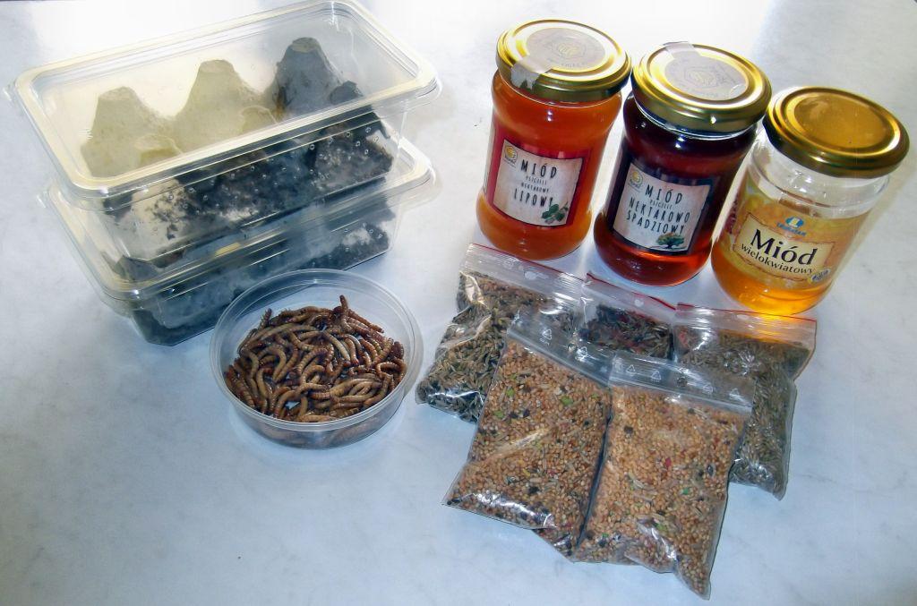 Czym i jak karmić mrówki?