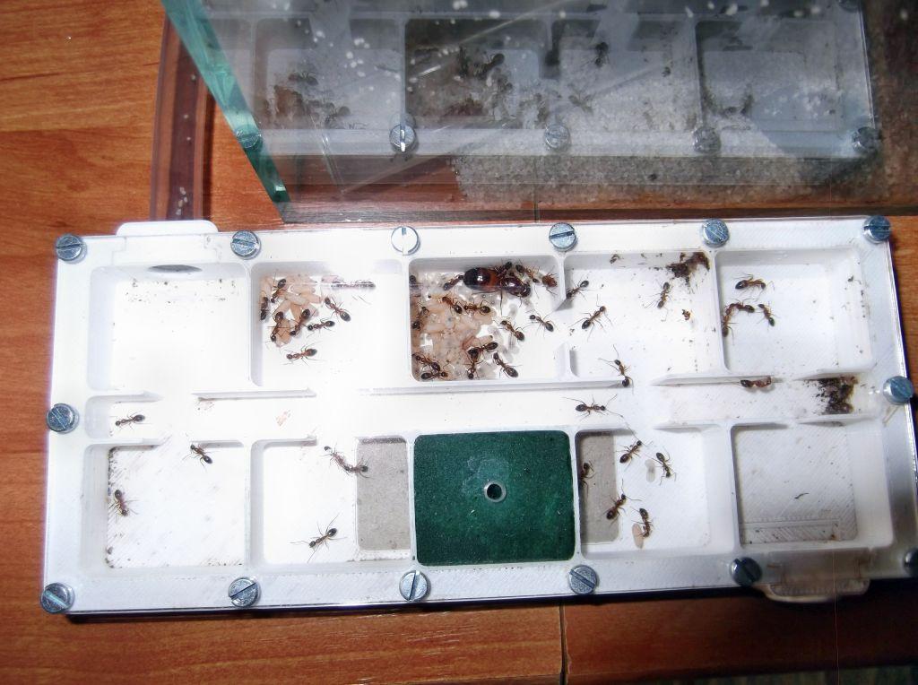 Hotel dla mrówek