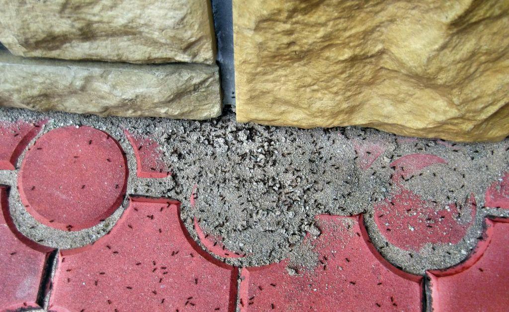 Jak pozbyć się mrówek?