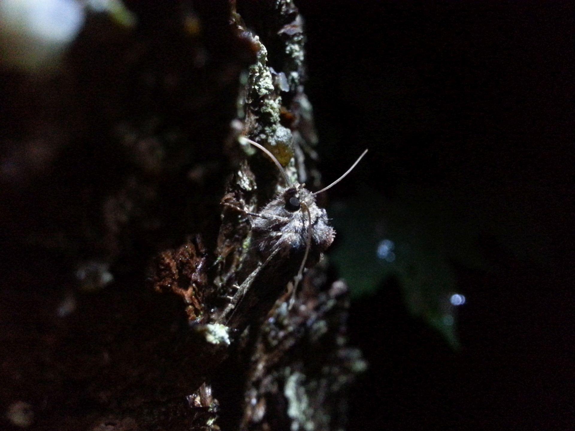 Warsztaty entomologiczne