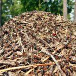 Znaczenie mrówek w przyrodzie