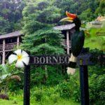 Lecę w tropiki na Borneo badać mrówki!