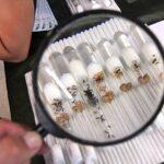 Najczęściej zadawane pytania przez początkujących hodowców mrówek