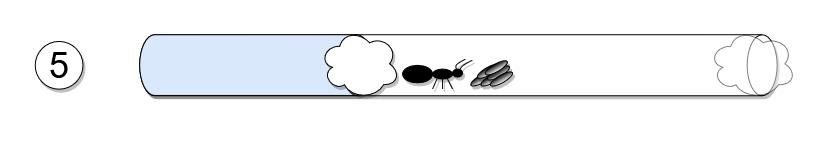 Jak zacząć hodowlę mrówek?
